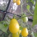 Yellow Pearshape 2006
