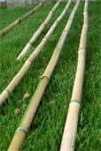 Bambusstäbe (Bildquelle: Henry)