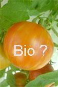Bio-Tomate (Bildquelle: Henry)