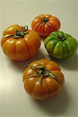 Tomatensorte Costoluto