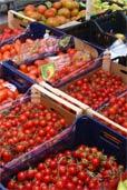 Italienische Tomaten-Vielfalt (Bildquelle: Henry)