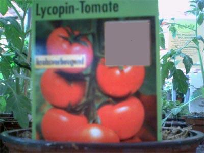 Die Lycopin-Tomate (Bildquelle: Henry)