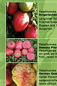 Tomaten von Arche Noah (Bildquelle: Henry)