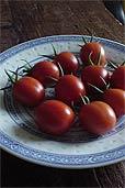 Keine Gen-Tomaten, sondern Grappoli Corbarino (Bildquelle: Henry)