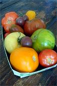 Supermarkt-Tomaten (Bildquelle: Henry)