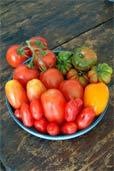 Tomaten vom Markt (Bildquelle: Henry)