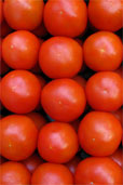 Normierte Tomaten © Grace Winter / PIXELIO